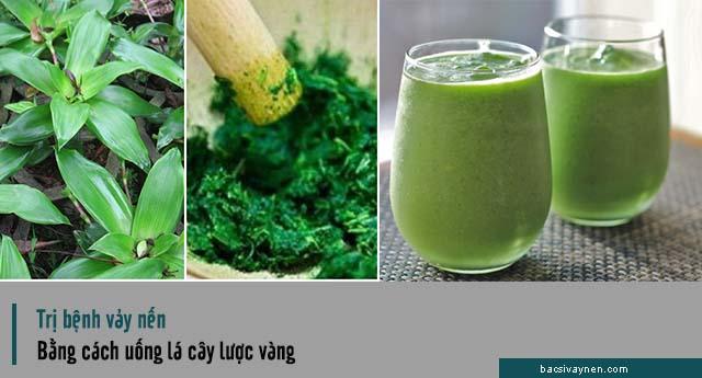 Uống lá cây lược vàng trị bệnh vẩy nến