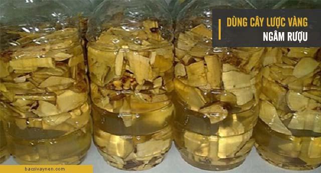 Cây lược vàng ngâm rượu chữa vẩy nến