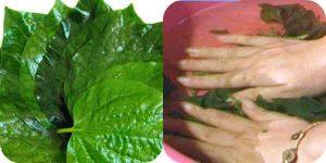 bài thuốc ngâm rửa lá lốt chữa vẩy nến
