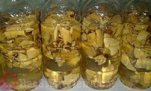 Cây lược vàng ngâm rượu chữa bệnh á sừng