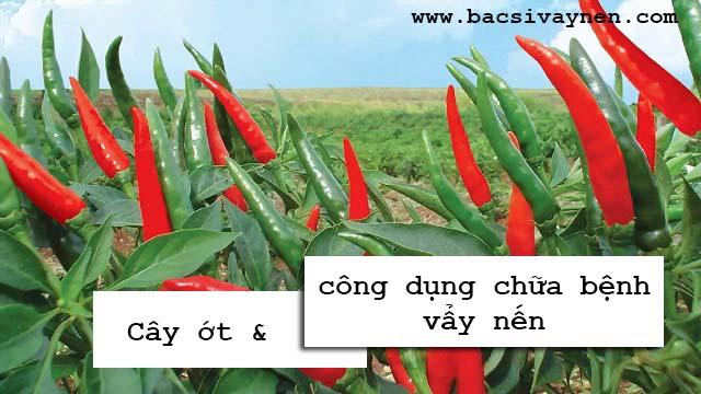 Công dụng của cây ớt đối với tình trạng vẩy nến